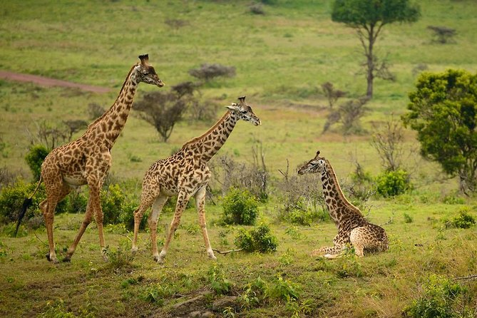 Best of Tanzania 6 days