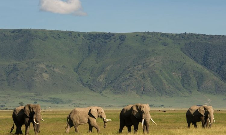 Kenya - Uganda Combined Wildlife Safaris -  9 days